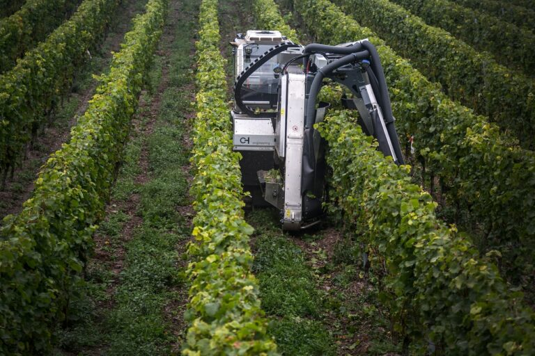 Innovation im Weinbau